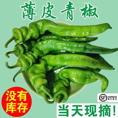 螺丝椒新鲜薄皮青椒现摘现发自种香辣脆新鲜蔬菜辣椒批发顺丰包邮