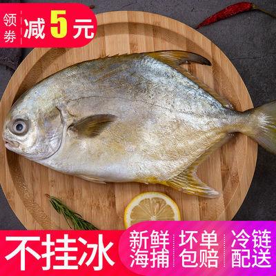 不挂冰特级野生金鲳鱼大号新鲜冷冻现货白银海鲳鱼平鱼海鲜水产