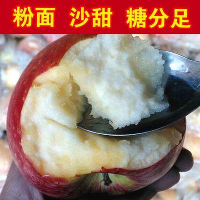 【秦冠粉苹果】陕西礼泉秦观苹果新鲜当季现摘冰糖心水果整箱批发
