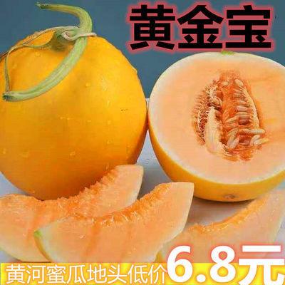 陕西黄河蜜瓜新鲜时令水果黄金脆甜瓜当季小瓜哈密香瓜包邮