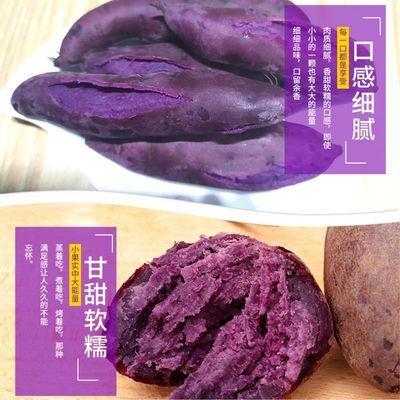 农家沙地紫薯新鲜紫心番薯地瓜5斤板栗红薯蔬菜批发现挖现发山东