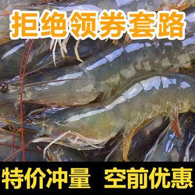 净重4斤水产海鲜大虾鲜活新鲜海虾活体对虾基围虾白虾青岛大虾