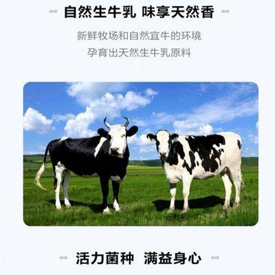 【特价】【新日期】新希望琴牌青岛风味老酸奶益生菌发酵乳酸奶16