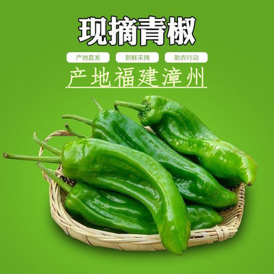 新鲜青椒薄皮青椒泡椒虎皮青椒微辣尖椒现摘现发农家自种5斤装