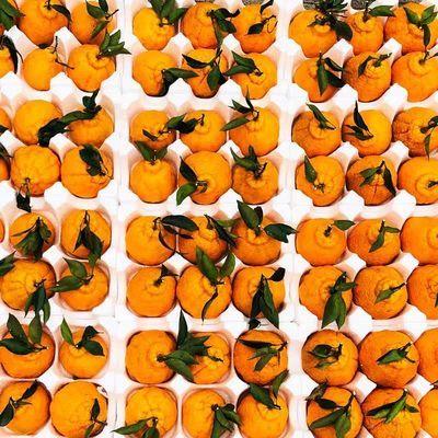四川丹棱正宗丑柑丑橘丑八怪不知火新鲜水果孕妇水果净重5斤8斤装