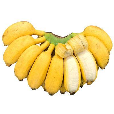 广西小米蕉当季新鲜水果皇帝蕉批发包邮现摘现发酸甜芭蕉3/5/9斤