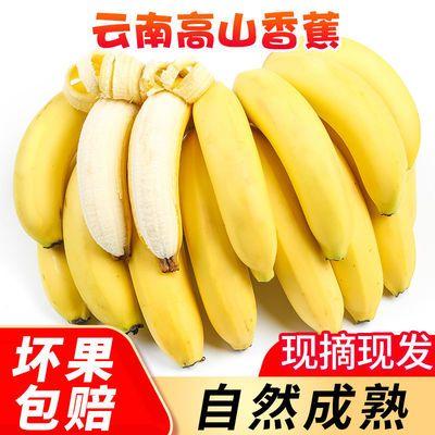 云南高山香甜大香蕉当季新鲜水果山地蕉净重9斤非小米蕉批发包邮