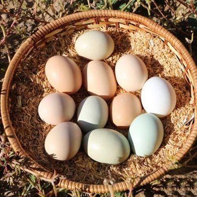 热卖舌尖上的玉食 新鲜乌鸡蛋绿壳蛋30枚包邮破损包赔 20-60枚可