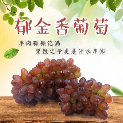 串装时令当季葡萄水果水果装五斤孕妇郁金香郁金香葡萄新鲜茉莉北
