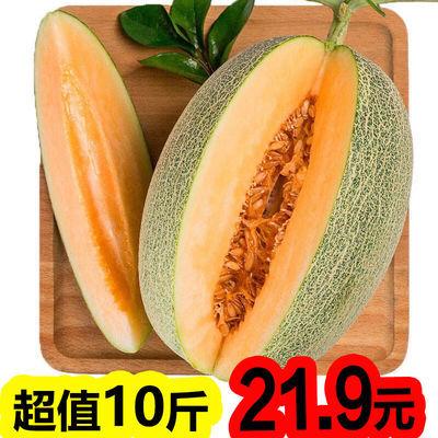 【快速发货】10斤新疆哈密瓜 西州蜜瓜水果新鲜现季带箱网纹瓜