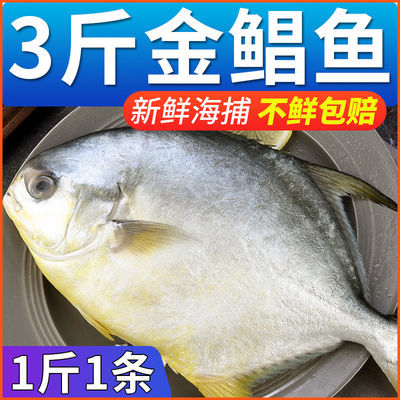 【特级】野生金鲳鱼大号新鲜冷冻鲜活白鲳鱼海昌鱼平鱼海鲜水产