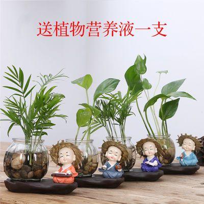 创意品花盆陶瓷水培植物花瓶绿萝插花玻璃透明小和尚装饰品摆件