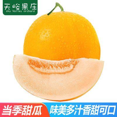 【多仓发货】黄河蜜瓜新鲜哈密瓜水果3斤装(单果400g起)