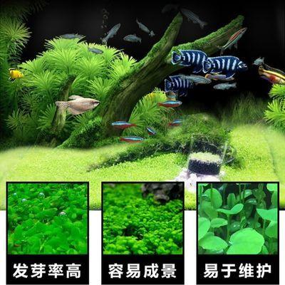 鱼缸装饰速成水草种子迷你对叶牛毛爱情幸运心形草真植物造景装饰