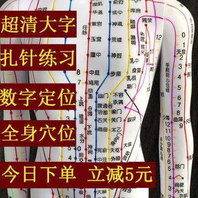 中医针灸穴位图人体模型50cm男女模型清晰经络小人体针灸穴位模型