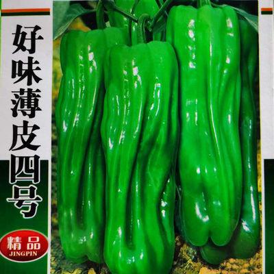 早熟薄皮青椒种子甜椒灯笼椒种子四季播蔬菜种子庭院大田阳台盆栽