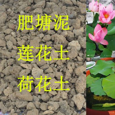 荷塘泥土 花土 鱼塘泥土 营养土碗莲睡莲荷花土 菜土种植泥 包邮