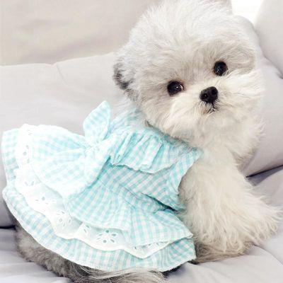 热销夏季小狗狗猫咪衣服泰迪贵宾比熊博美约克夏雪纳瑞小型犬宠物
