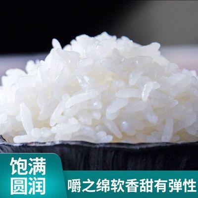 【东北大米10斤】长粒香米宝宝粥原料黑土地农家米当季新米晚稻米