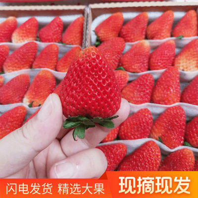 四季草莓新鲜双流草莓水果红颜奶油烘焙商用酸草莓1盒3盒5盒包邮