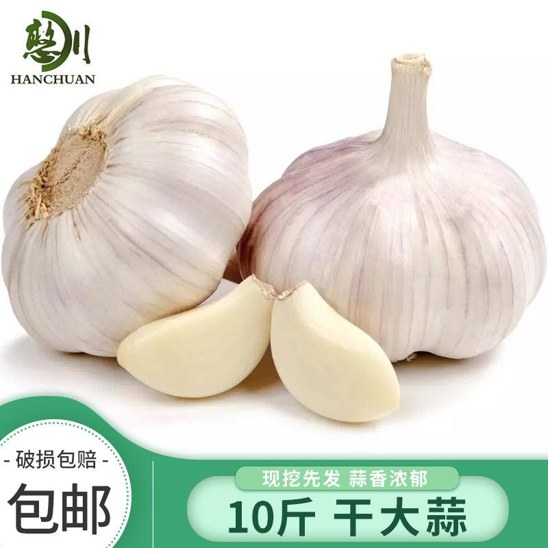 憨川 10斤 干蒜头 大蒜头蒜 紫白皮蒜 包邮 新干蒜2.5斤/5 新干蒜