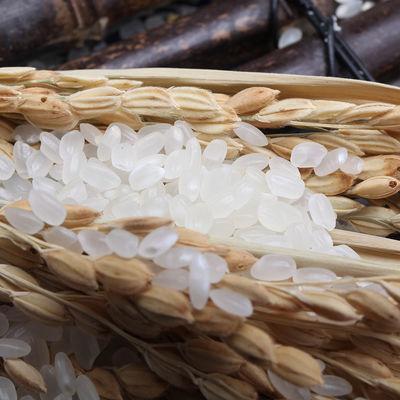 【特价】【东北大米20斤】黑龙江大米10kg 现磨现卖小町米 2019年