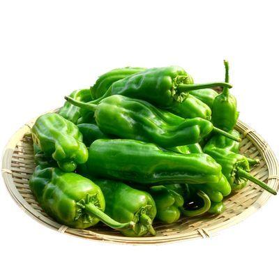 新款辣椒现摘薄皮椒农家自种新鲜红辣椒绿色无农药薄皮青椒微辣虎