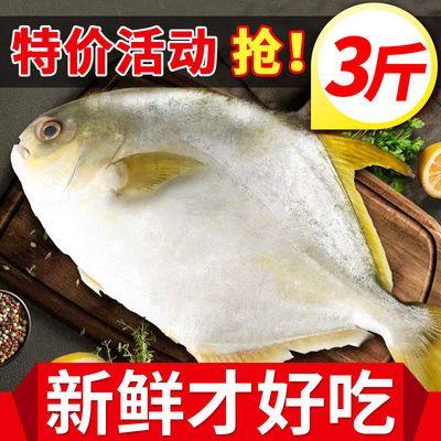 新款【特级】野生金鲳鱼大号新鲜冷冻鲜活白鲳鱼海昌鱼平鱼海鲜水
