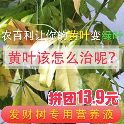 发财树专用营养液促生根发芽防黄叶金钱树幸福树绿叶灌木绿萝盆栽