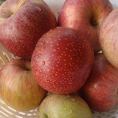 新品【限时特价】苹果水果10斤整箱批发新鲜当季陕西秦冠甜粉面丑
