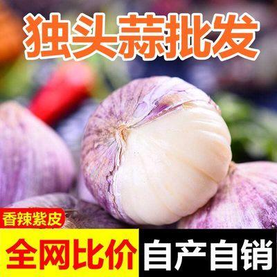 独头蒜紫皮大蒜批发新鲜蔬菜干蒜农家种植大蒜头独蒜头1/2/3/5斤