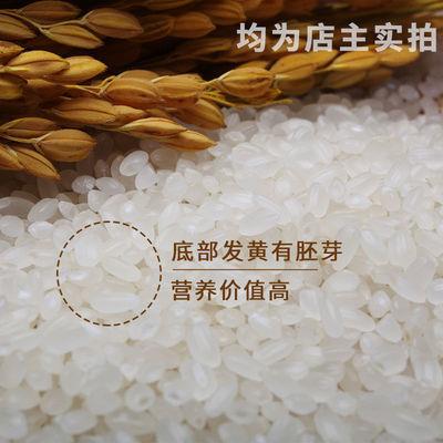 【热卖】小町稻大米10斤装正宗东北大米香米农家自产优质2019年新