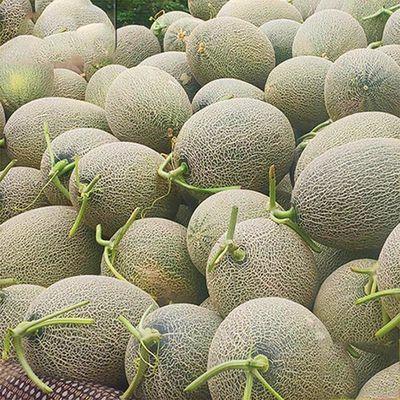 海南哈密瓜新疆一箱水果哈密瓜爆甜新鲜 应季水果批发 整箱甜瓜