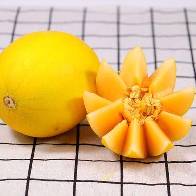 黄金蜜瓜民勤密瓜沙漠哈密瓜新鲜水果应季香瓜甜瓜黄河蜜1/5/10斤
