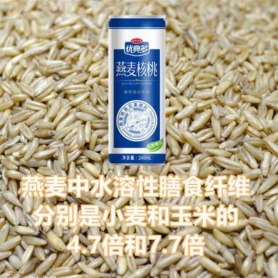 【热卖】【无蔗糖型】燕麦核桃牛奶八罐尊享起拍营养早餐首选