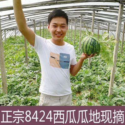【促销】美味连连 新鲜现摘8424西瓜一个装当季麒麟水果