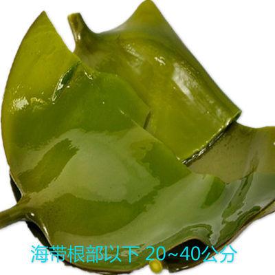 【促销】山东荣成特产野生海带盐渍海带头毛重5斤装无添加火锅凉