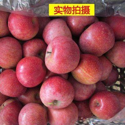 【促销】甘肃静宁老树秦冠苹果5/10斤新鲜野生丑水果粉面刮泥辅食