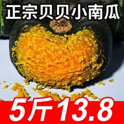 正宗贝贝南瓜板栗味粉糯栗面孕妇宝宝辅食日本进口种源贝贝小南瓜