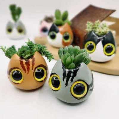 猫头多肉肉花盆儿创意盆栽组合植物陶瓷含盆带土办公室绿植微景观【8月31日发完】