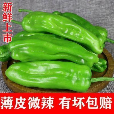 新品辣椒新鲜青辣椒薄皮青椒芜湖椒泡椒应季新鲜蔬菜虎皮青椒微辣