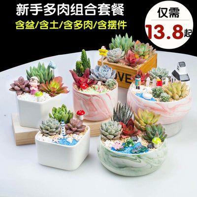 多肉陶瓷套装组合多肉植物组合盆栽套餐含盆含土吸甲醛DIY包邮