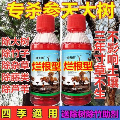 农药除草剂烂根除树剂除竹剂杀大树药杀树王大树竹子杂草藤类批发