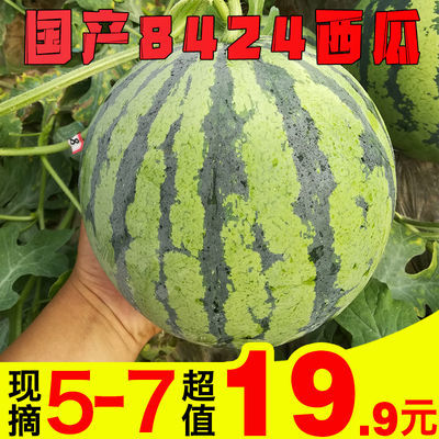 美味连连 新鲜现摘8424西瓜一个装当季麒麟水果