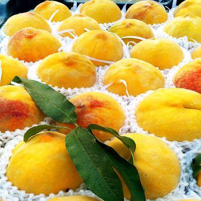 现摘砀山黄桃毛桃5/10斤包邮产酸甜可口产地直发新鲜桃子应季水果【7月2日发完】