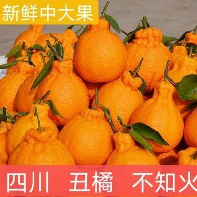 四川丑橘不知火丑八怪丑橘新鲜水果丑橘批发丑橘丑桔