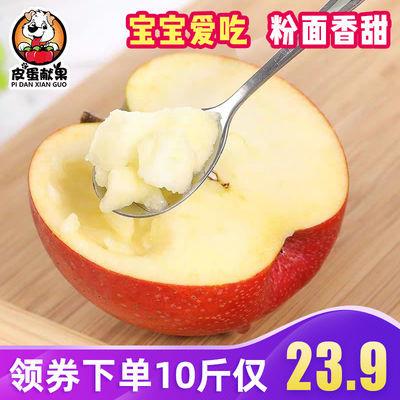 2020夏季鲜果新鲜现货陕西秦冠苹果10斤包邮宝宝刮泥粉面大苹果整