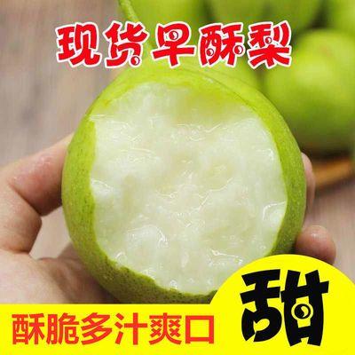 现摘陕西早酥梨10斤当季新鲜水果5斤整箱批发青皮梨子小香梨