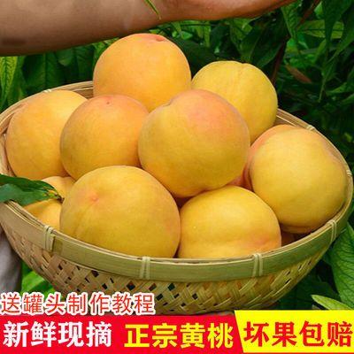 现摘黄桃新鲜水果3/5/10斤孕妇水果毛桃水蜜桃罐头桃脆桃甜桃蜜桃