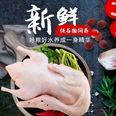 【顺丰包邮】土鸭老鸭子农家散养土鸭子麻鸭新鲜鸭子肉活现杀老鸭